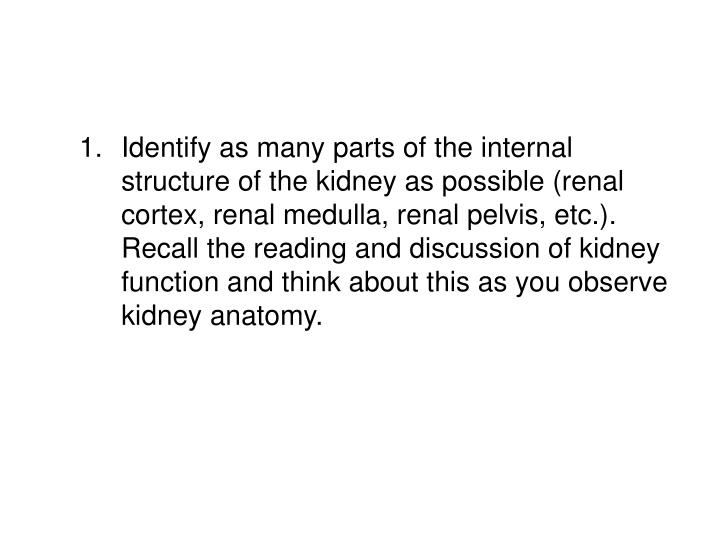 Identify as many parts of the internal structure of the kidney as possible (renal cortex, renal medulla, renal pelvis, etc.). Recall the reading and discussion of kidney function and think about this as you observe kidney anatomy.