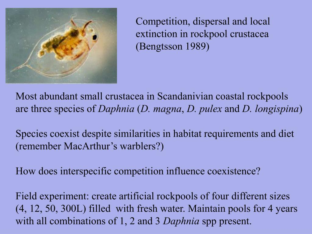 Competition, dispersal and local