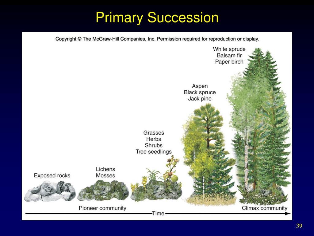 Primary Succession