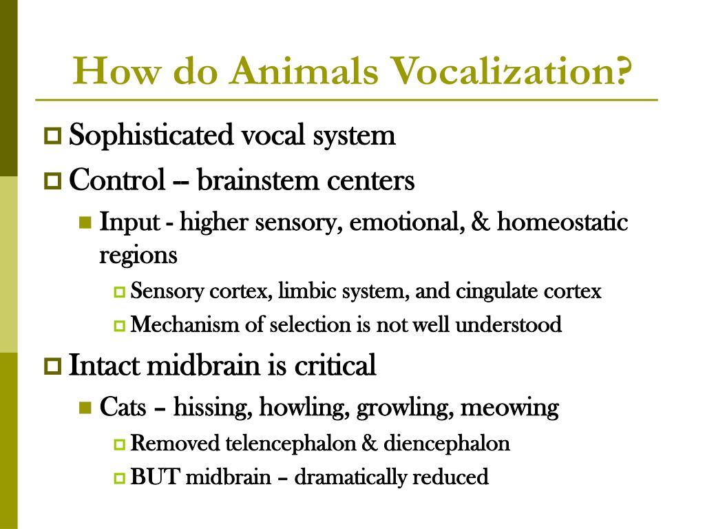 How do Animals Vocalization?