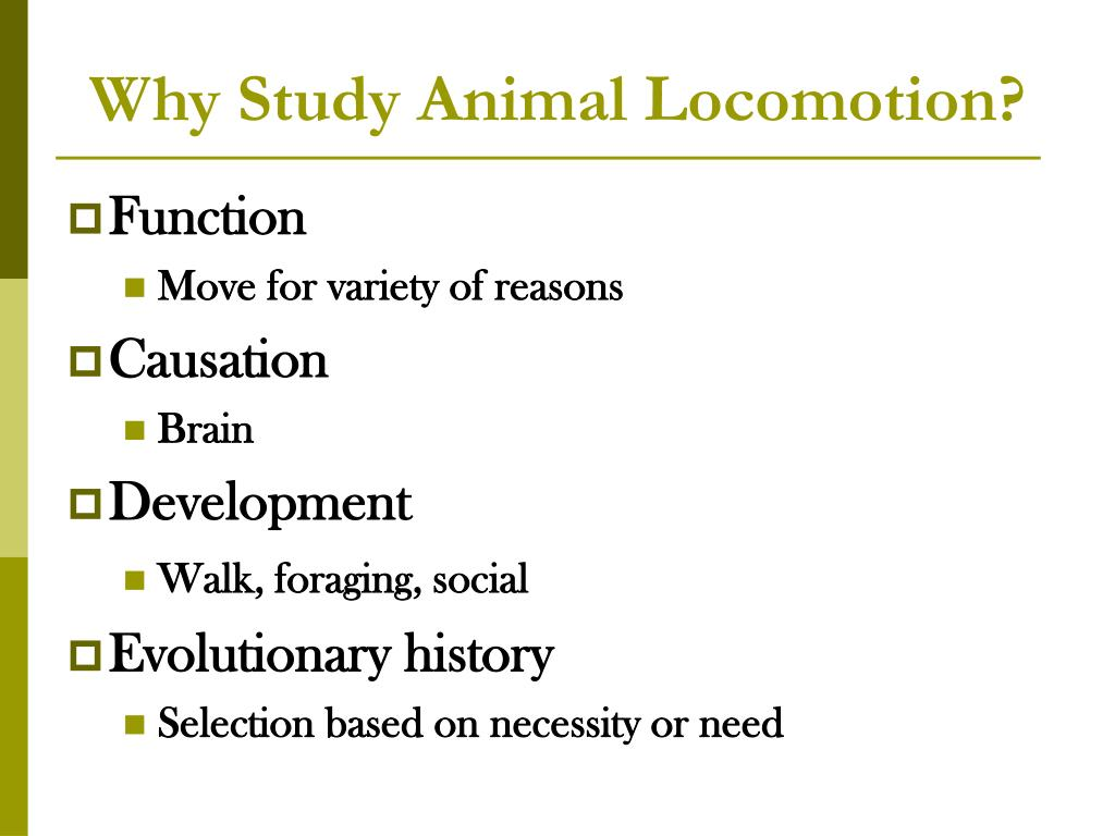 Why Study Animal Locomotion?