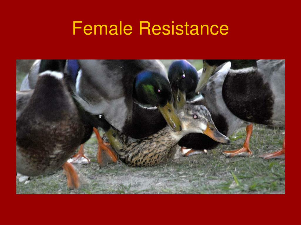 Female Resistance