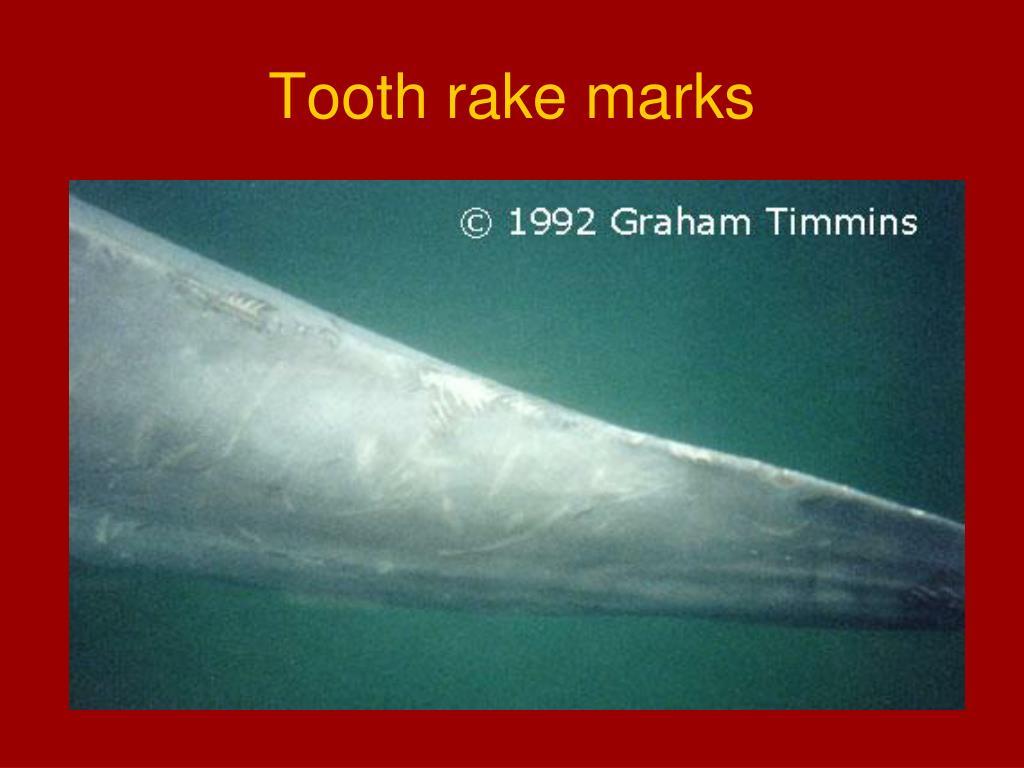 Tooth rake marks