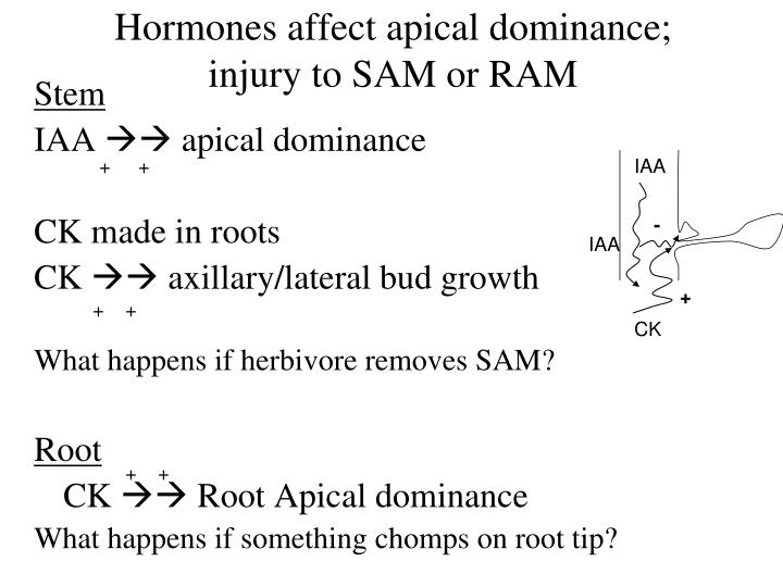 Hormones affect apical dominance;