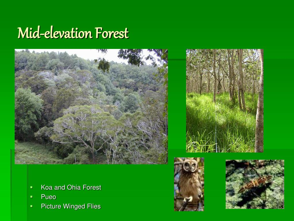 Mid-elevation Forest
