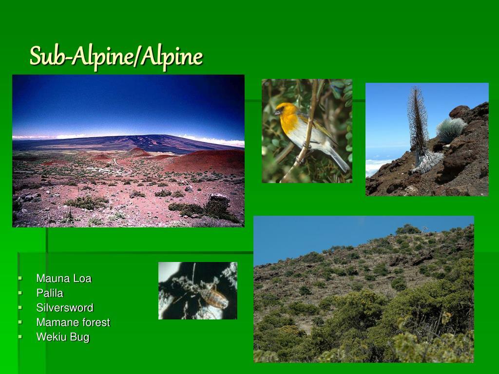 Sub-Alpine/Alpine