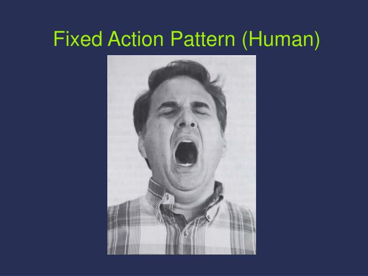 Fixed Action Pattern (Human)