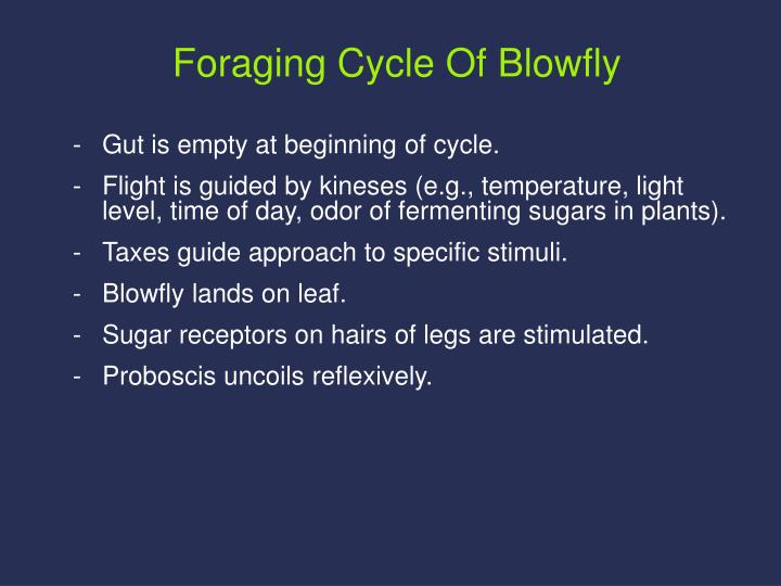 Foraging Cycle Of Blowfly