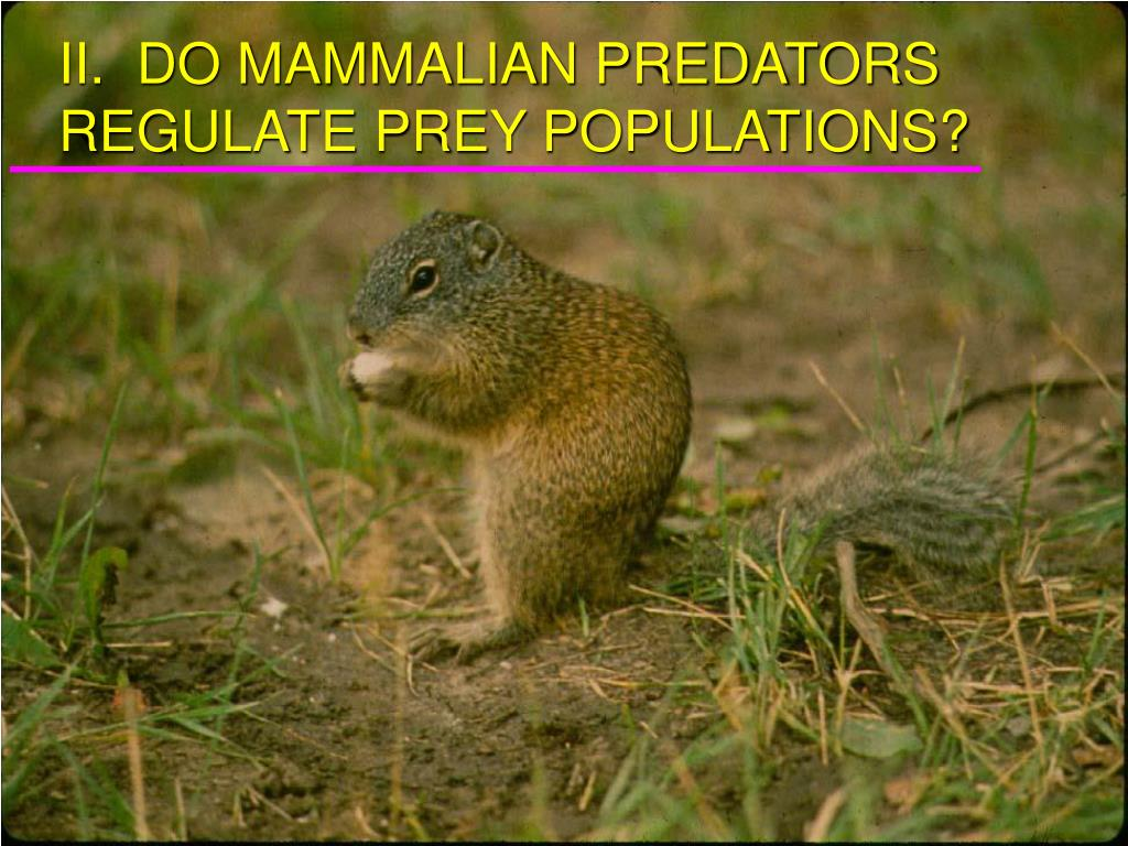 II.  DO MAMMALIAN PREDATORS REGULATE PREY POPULATIONS?