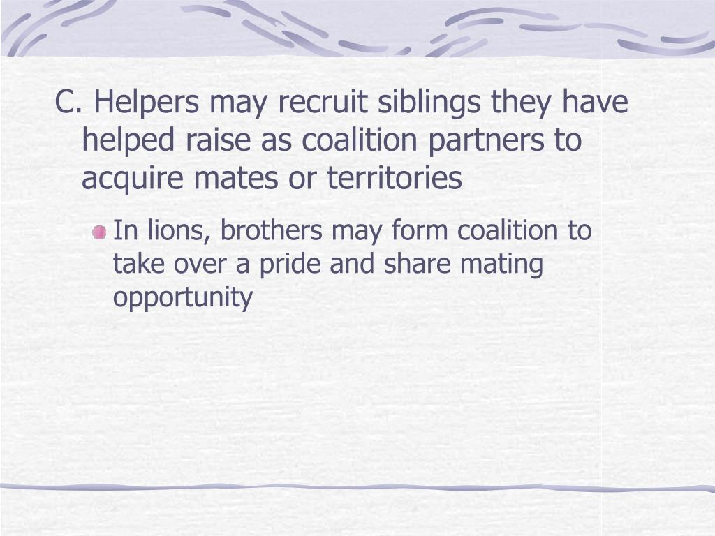 C. Helpers may recruit siblings they have helped raise as coalition partners to acquire mates or territories