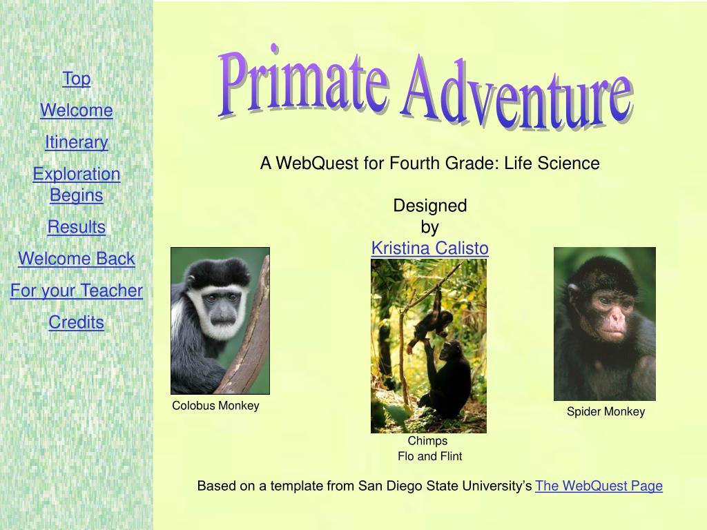 Primate Adventure