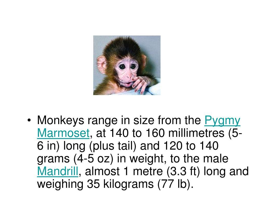 Monkeys range in size from the