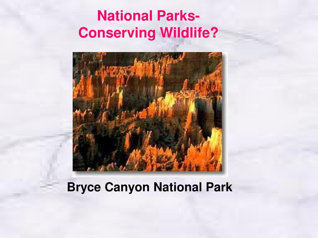National Parks- Conserving Wildlife?