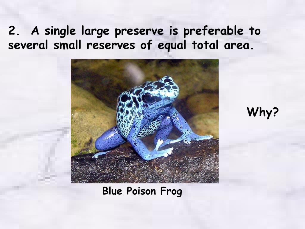 2.  A single large preserve is preferable to several small reserves of equal total area.