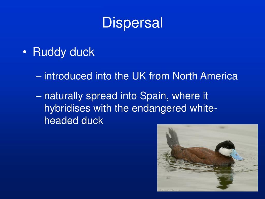 Dispersal