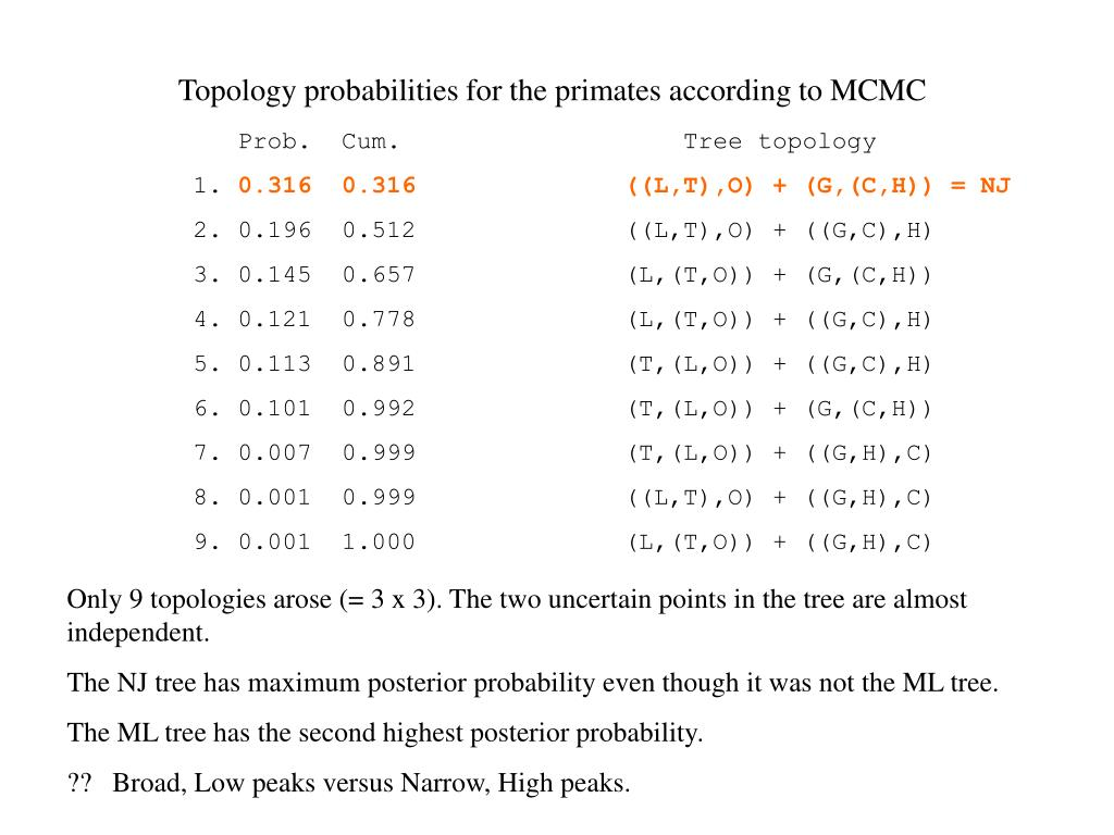 Topology probabilities for the primates according to MCMC