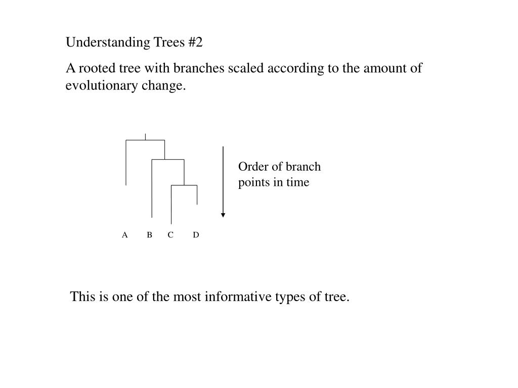 Order of branch points in time