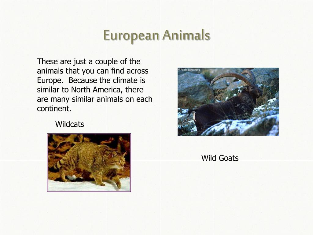 European Animals