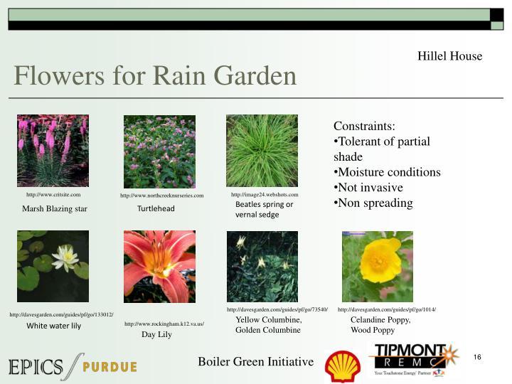 Flowers for Rain Garden