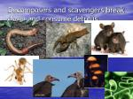 decomposers and scavengers break down and consume detritus