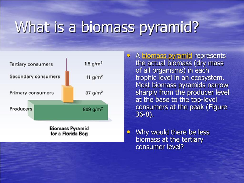 What is a biomass pyramid?