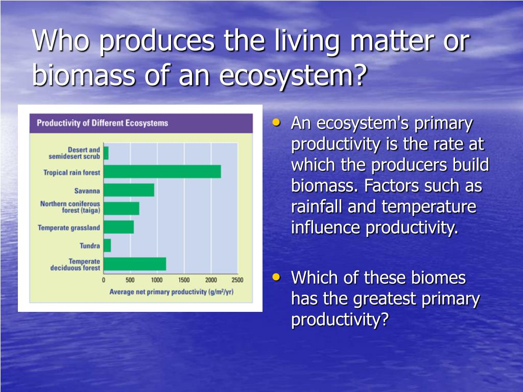 Who produces the living matter or biomass of an ecosystem?