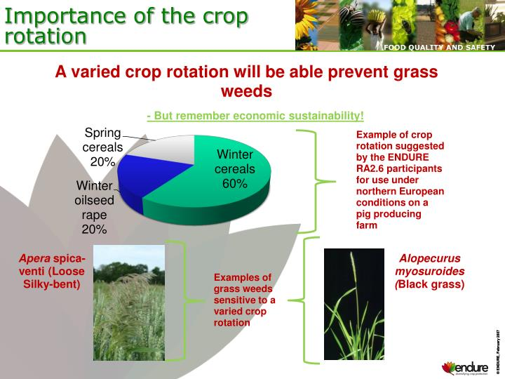 Importance of the crop rotation