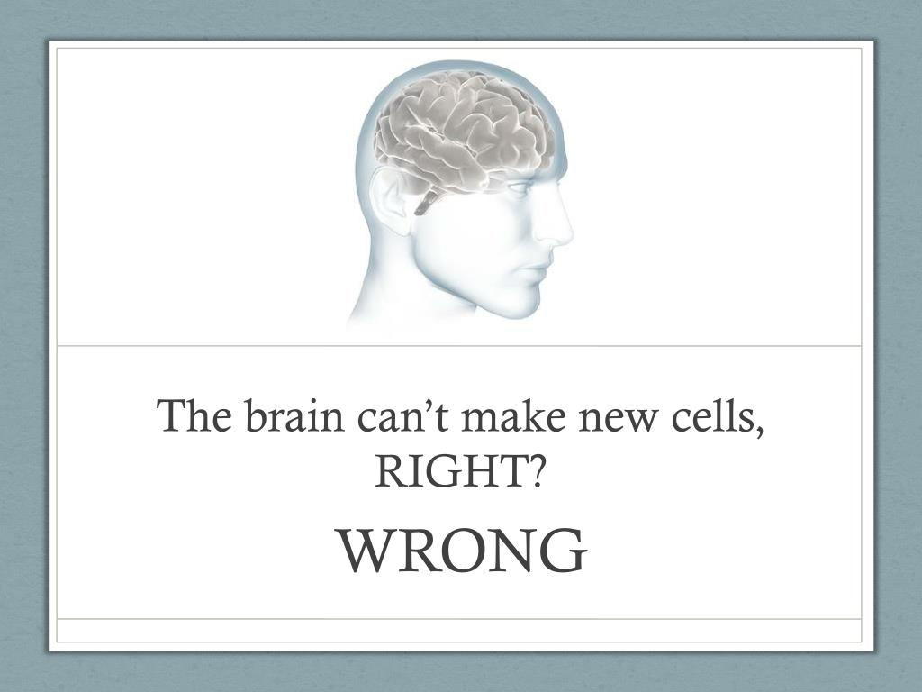 The brain can't make new cells, RIGHT?