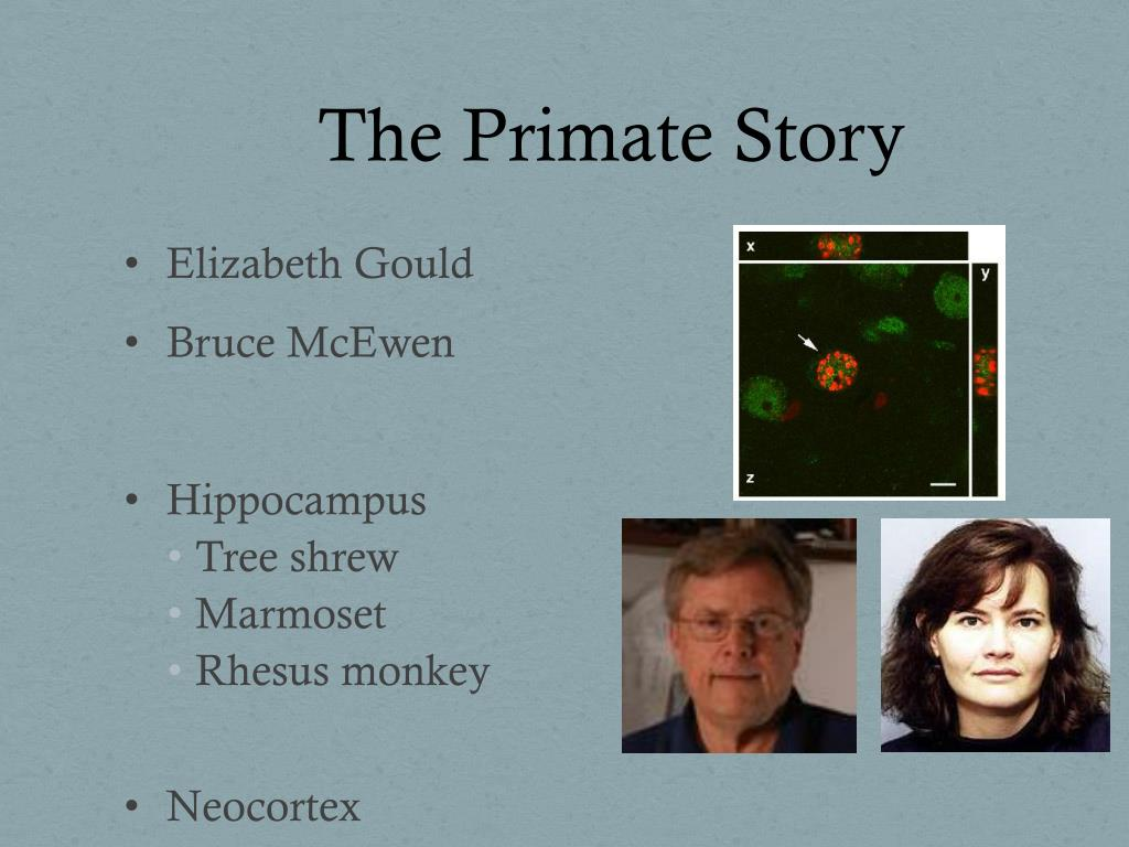 The Primate Story
