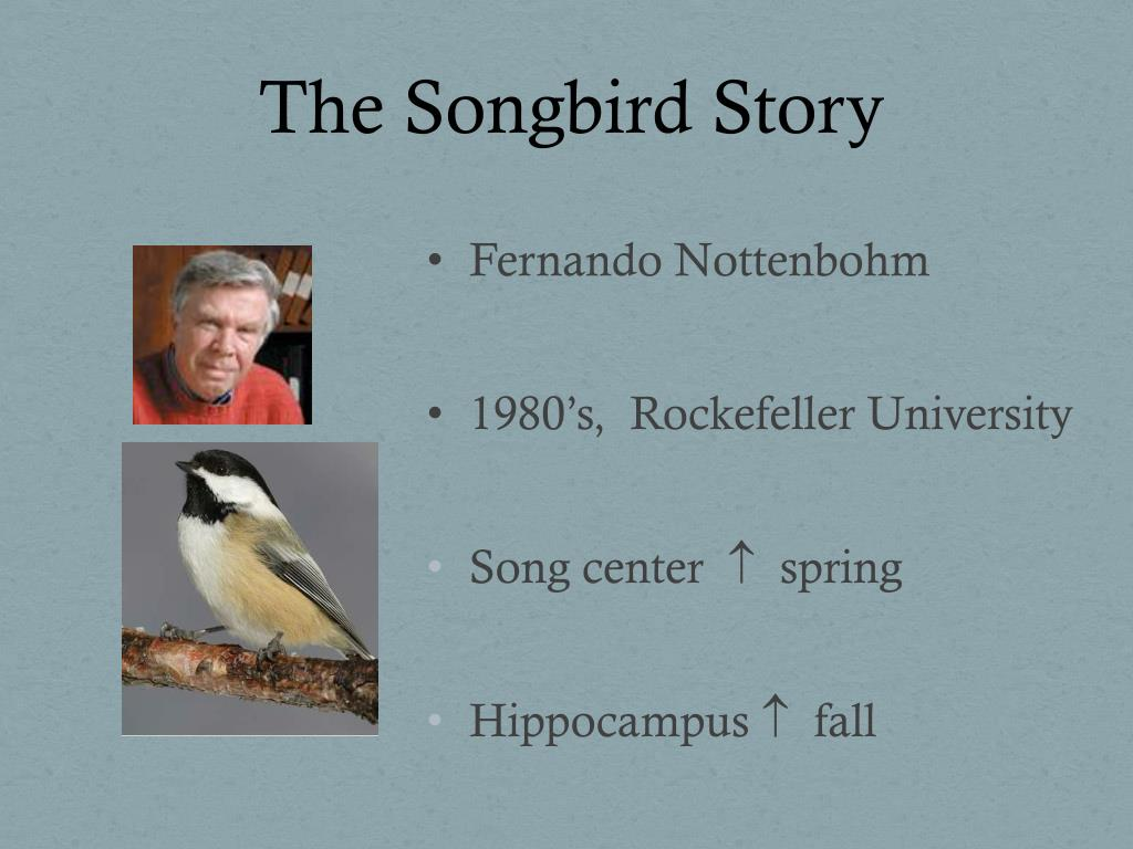 The Songbird Story