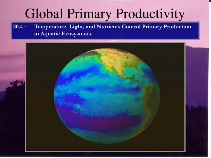 Global Primary Productivity