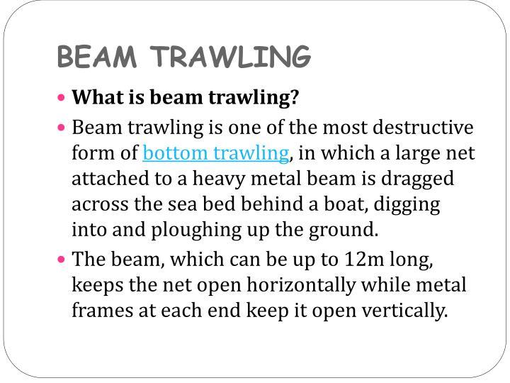 BEAM TRAWLING