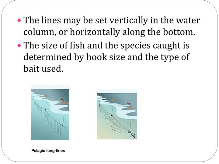 The lines may be set vertically in the water column, or horizontally along the bottom.