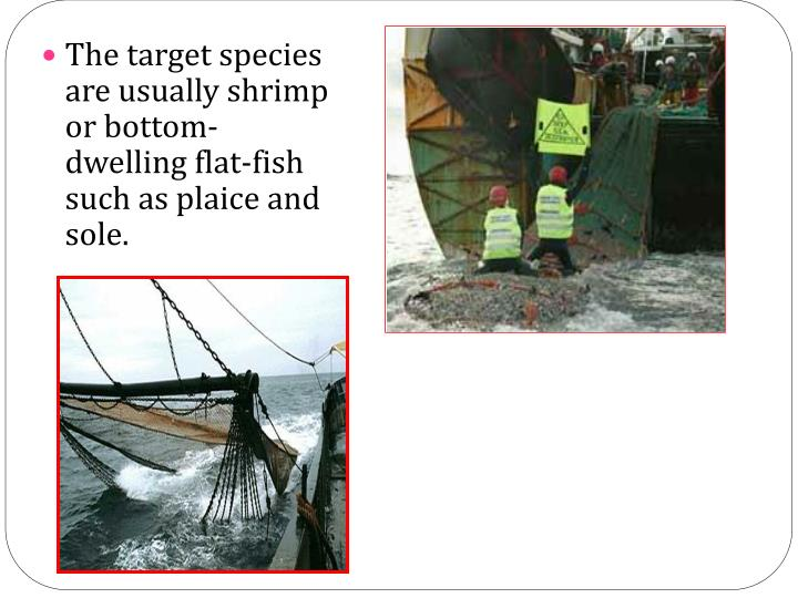 The target species are usually shrimp or bottom-dwelling flat-fish such as plaice and sole.