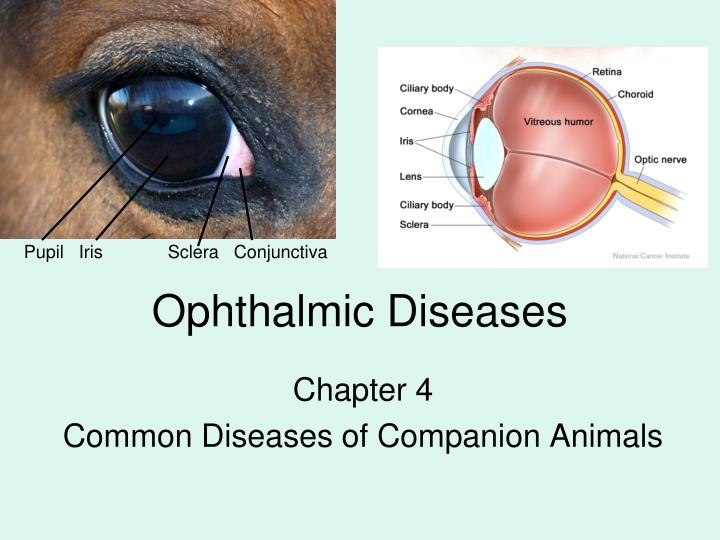 Ophthalmic diseases