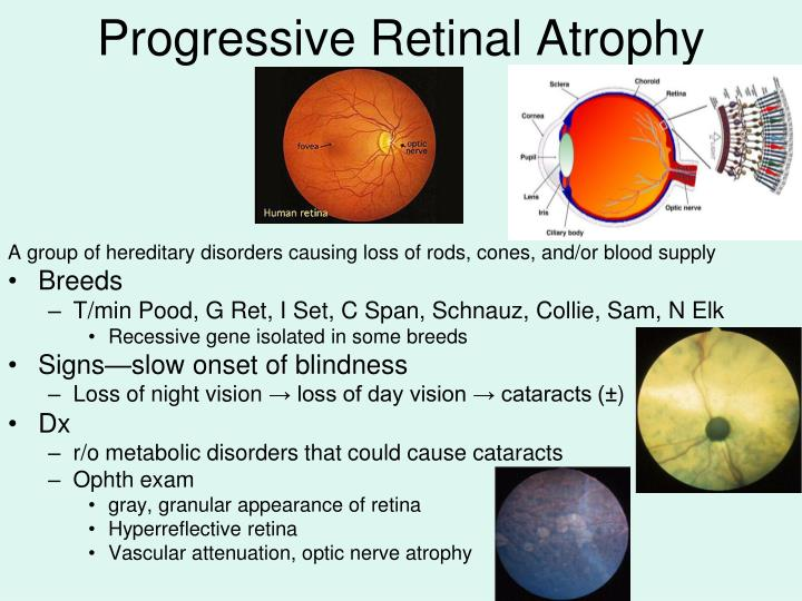 Progressive Retinal Atrophy