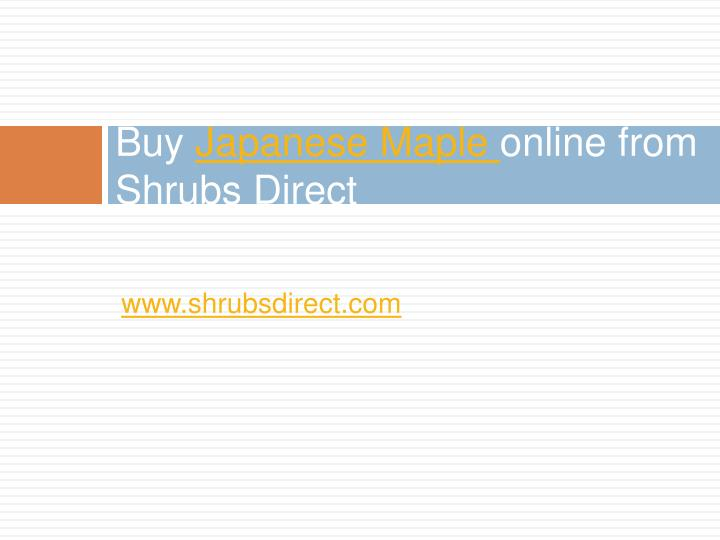 Buy japanese maple online from shrubs direct1