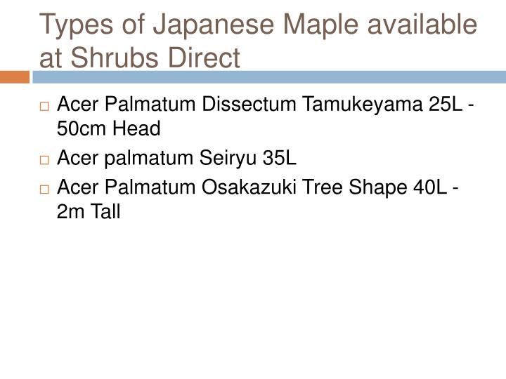 Types of japanese maple available at shrubs direct