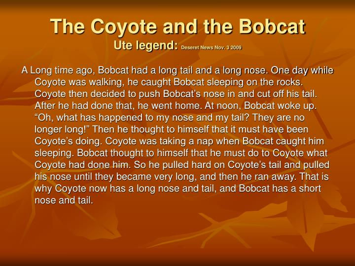 The coyote and the bobcat ute legend deseret news nov 3 2009