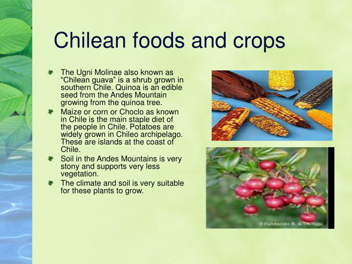Chilean foods and crops