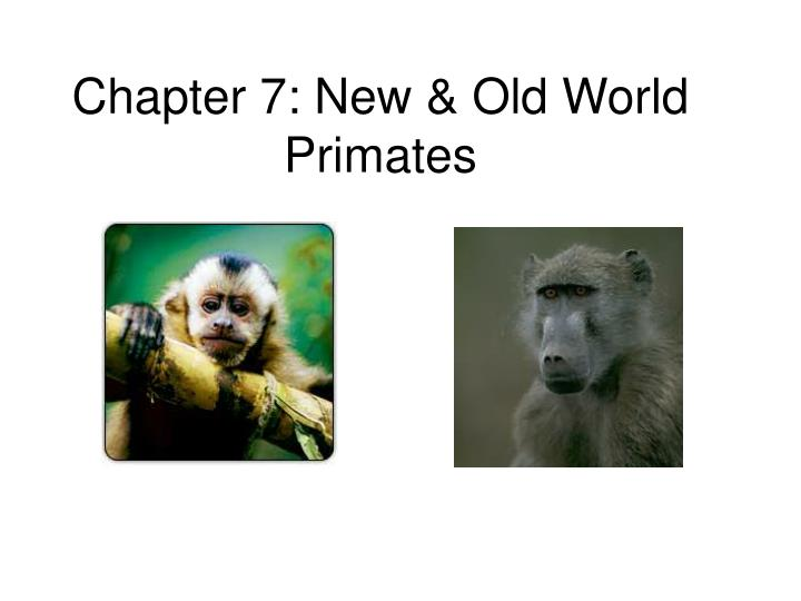 Chapter 7 new old world primates