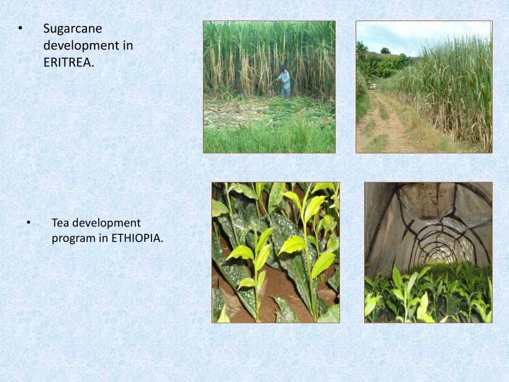 Sugarcane development in ERITREA.