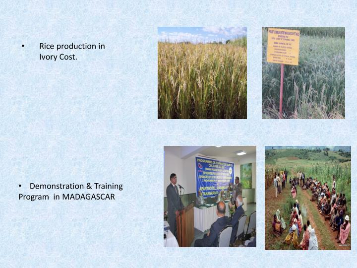Rice production in Ivory Cost.
