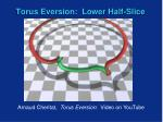 torus eversion lower half slice