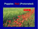 poppies red protonated