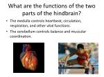 what are the functions of the two parts of the hindbrain