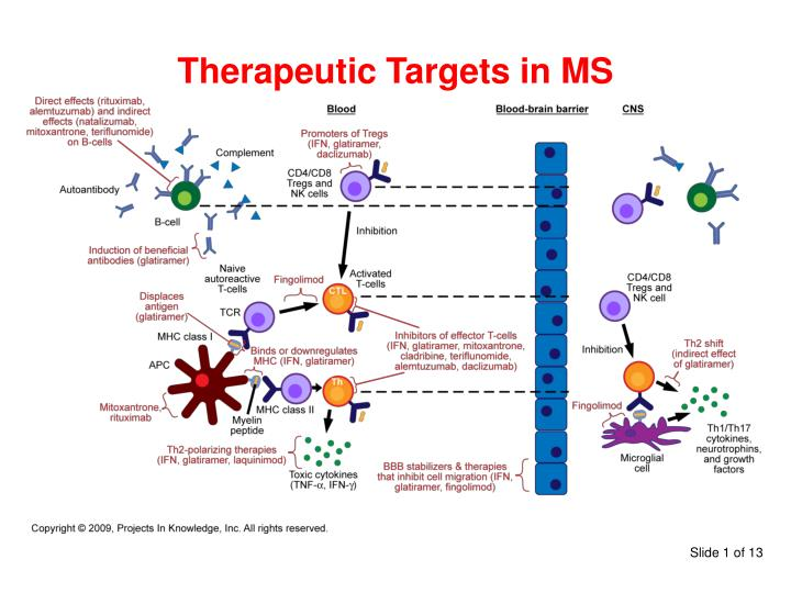 therapeutic targets in ms n.