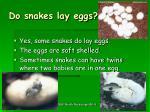 do snakes lay eggs