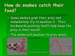 how do snakes catch their food