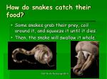 how do snakes catch their food1